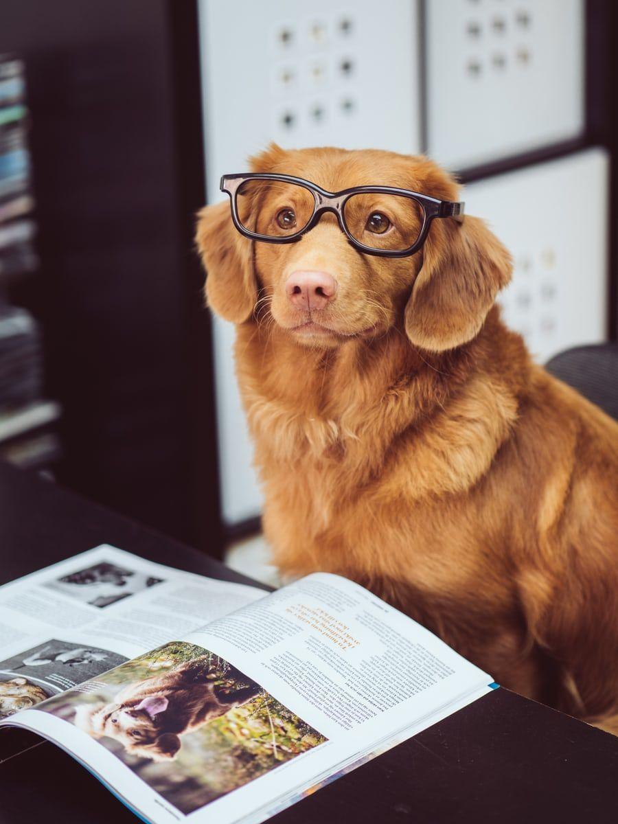 Asesoría veterinaria
